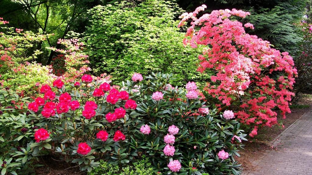 481_Rhododendronpark_Hobbie_in_Linswege.1024