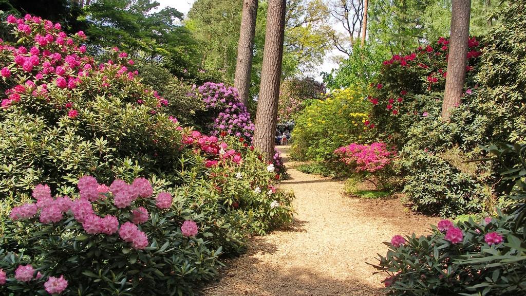485_Rhododendronpark_Hobbie_in_Linswege.1024