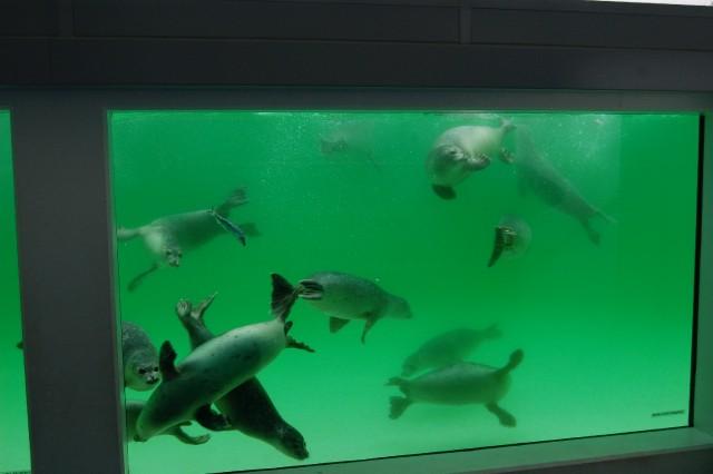 Seehundstation-Unterwasserscheibe